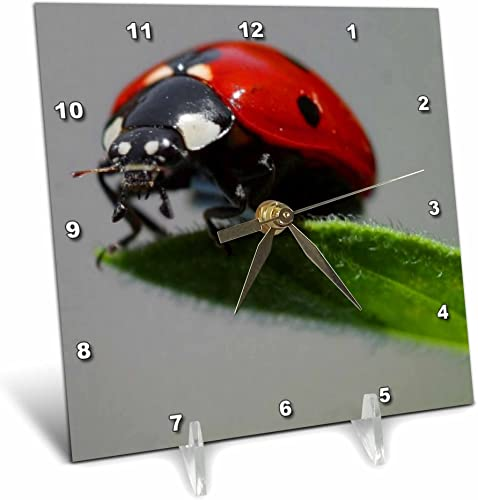 3dRose dc_21324_1 Insects Ladybug Desk Clock, 6 by 6-Inch