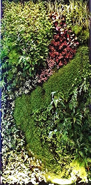 Green Wall Modular System Living Wall Vertical Garden Plants Home Office  Domestic Commercial Interior Decoration *