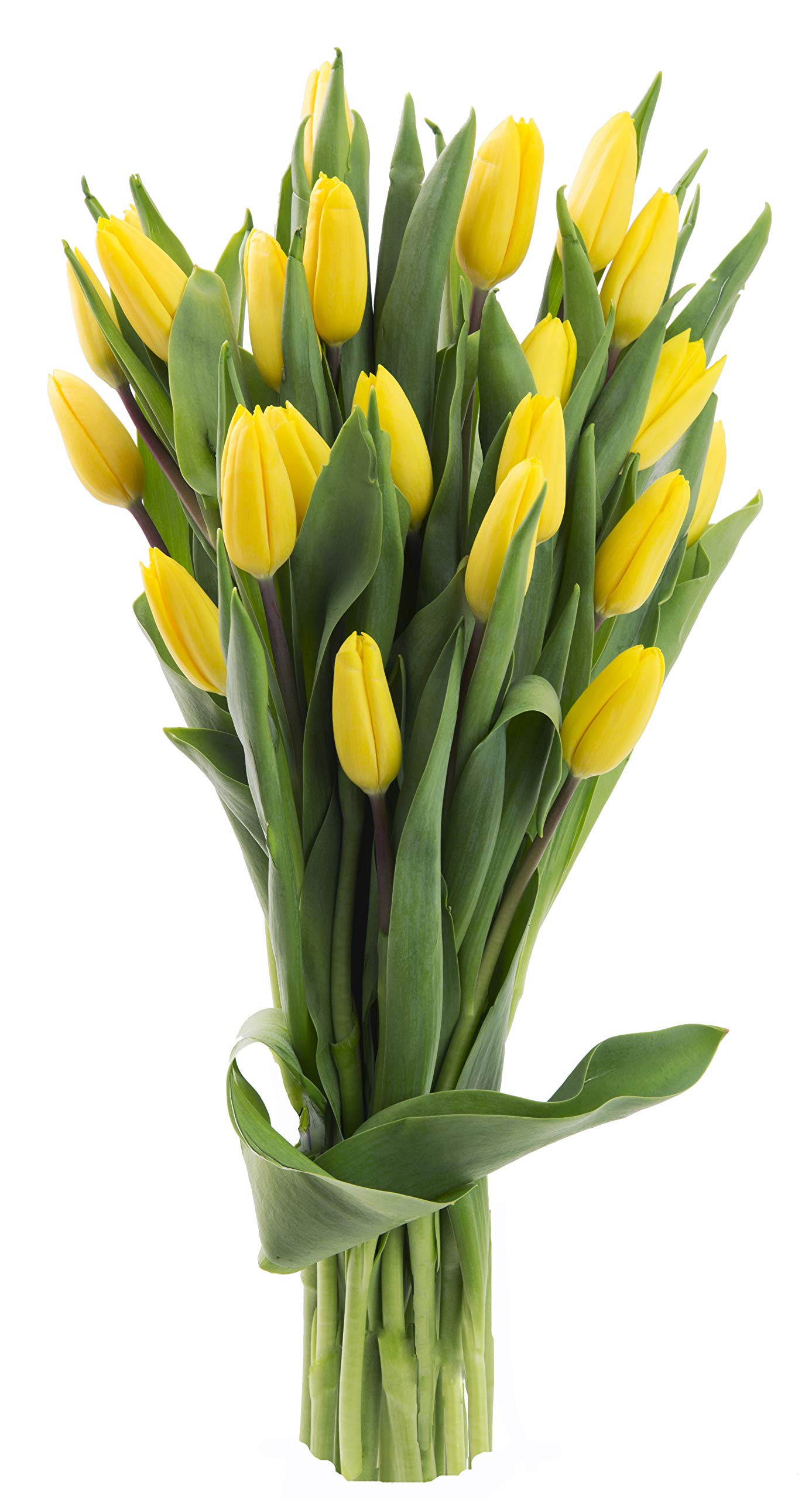 Blooms2Door 20 Yellow Tulips (Farm-Fresh Flowers, Cut-to-Order, and Homegrown in the USA)