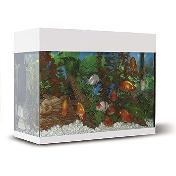 ICA KXI68B Kit Aqualux con Filtro Interior, Crema: Amazon.es ...