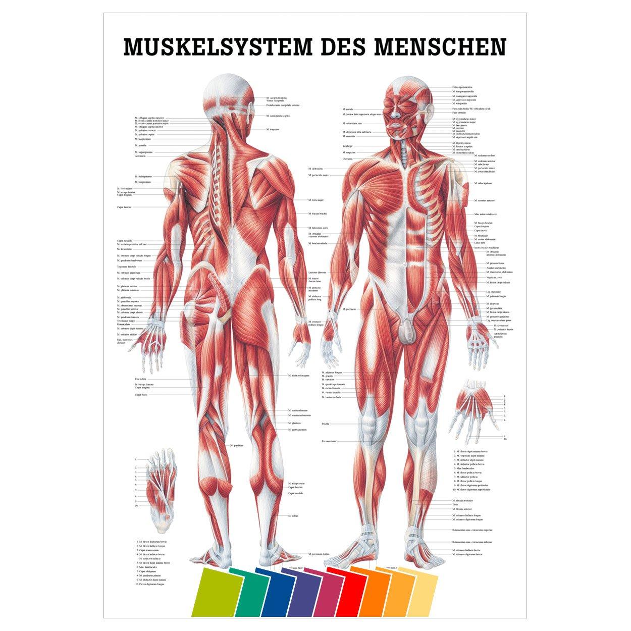 Großzügig Anatomie Des Menschen Online Spiele Fotos - Menschliche ...