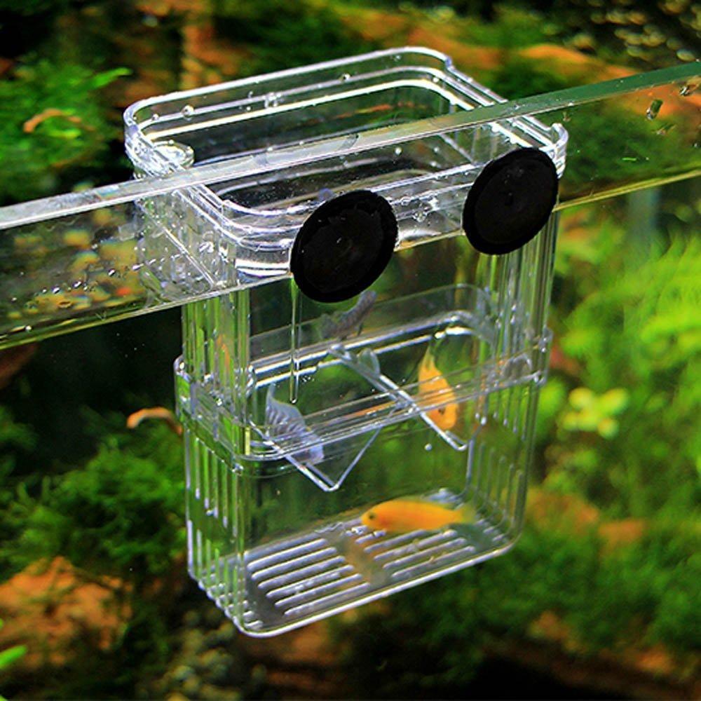Perfect Isolator for Aggressive Fish Injured Fish Small Fish Shrimp Clownfish Petzilla Basic Aquarium Fish Breeder Box for Hatchery