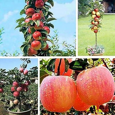 HOTUEEN 20pcs/ Bag Mini Tree Seeds Garden Yard Bonsai Fruit Plant Fruits : Garden & Outdoor