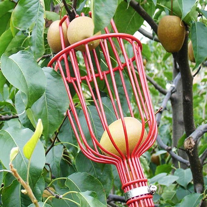 Hinmay Cesta de Metal Profesional para Recoger Frutas, Herramienta de Recogida de Frutas, Equipo para Obtener Frutas Extra Ligero, Ideal para Picar Naranjas ...