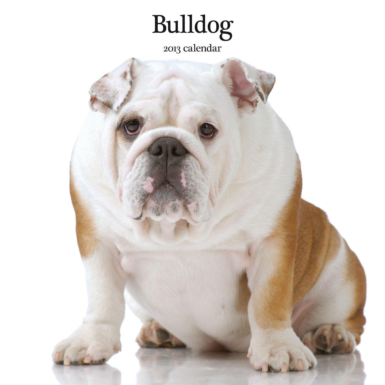 Magnet & Steel Bulldog Modern Wall Calendar