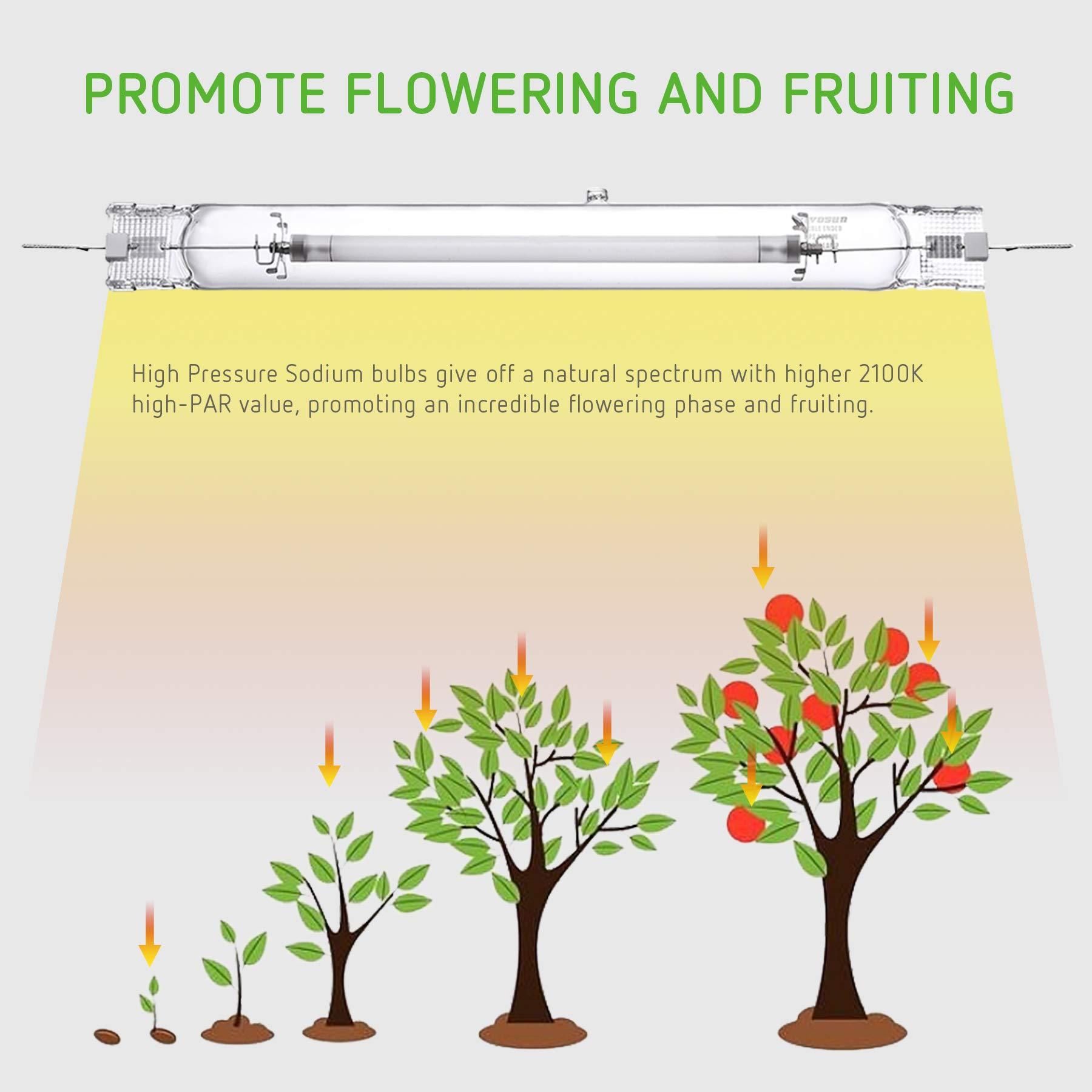 VIVOSUN 2 Pack of 1000W Double Ended High Pressure Sodium DE HPS Grow Bulb - Super Lumens 151,000 for Flourishing Growth [CCT 2100K] by VIVOSUN (Image #4)