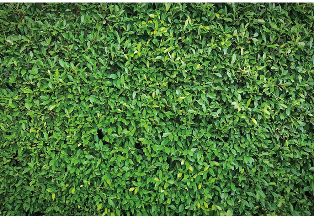 10x8ft Green Grass Vinyl Photography Background Green Leaves Vigour Outdoor Lawn Wedding Backdrop Party Decoration Banner Photo Studio Prop