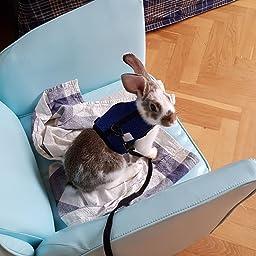 Petcomer Arnés Conejos con Correa Elástica para Animales Pequeños ...