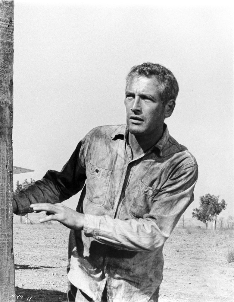 Paul Newman Shocked in Polo Black and White Photo Print 8 x 10