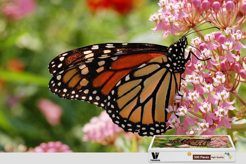 【国際ブランド】 pigbangbang、20.6 X 15.1インチ、Stainedアートパズルfor Kids Have Adult B07CK31MSZ pigbangbang、20.6 Have Jigsaw接着剤木製 – 蝶とピンク花 – 500ピースジグソーパズル B07CK31MSZ, あっとあるん:5d3c0cfa --- fenixevent.ee