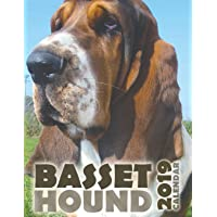 Basset Hound 2019 Calendar