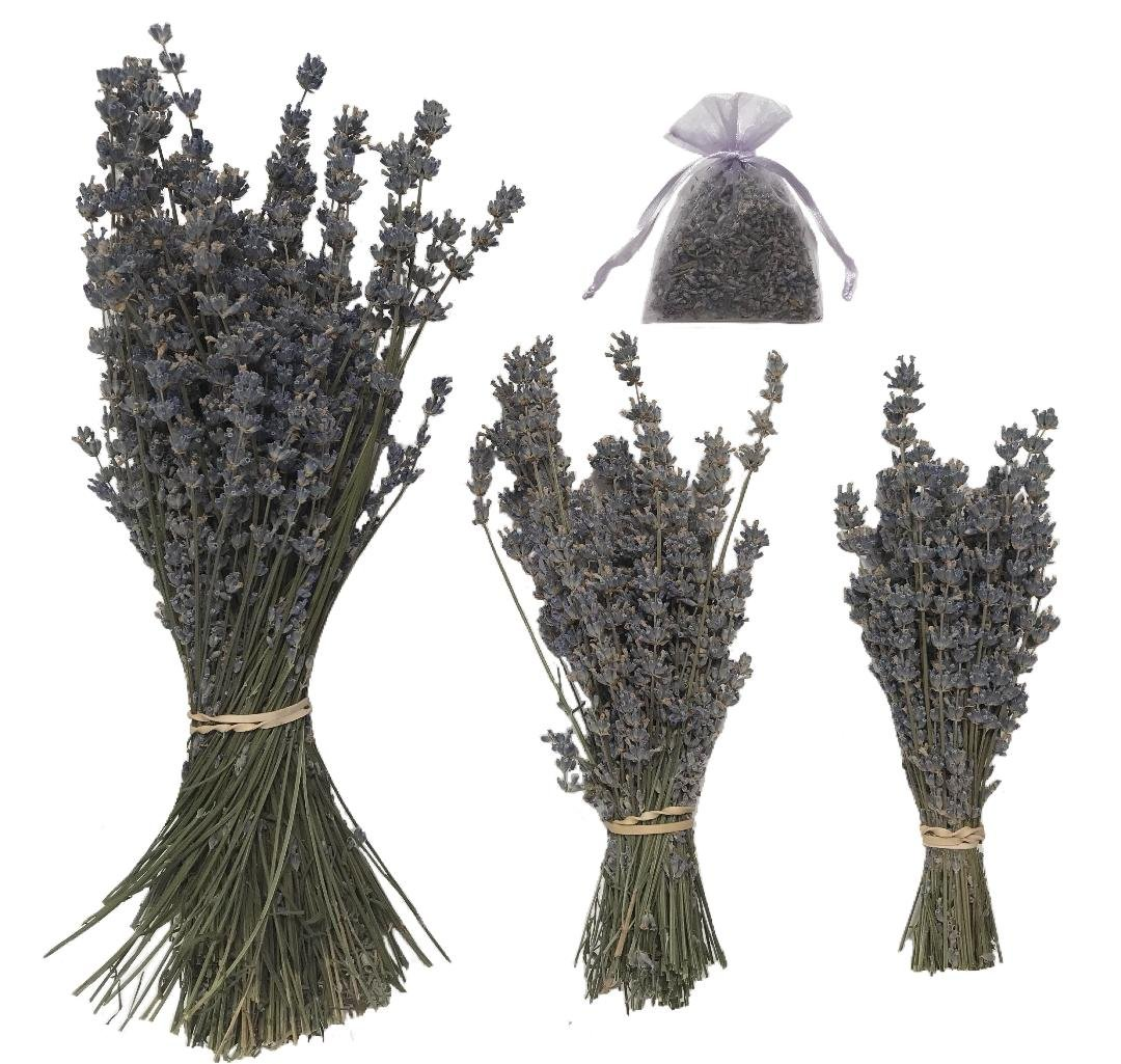 zziggysgal GROSSO dried Lavender Bundle - freshly harvested, a beautiful long stemmed, gray/blue colored lavender variety from Ships FAST! rosebud daisy