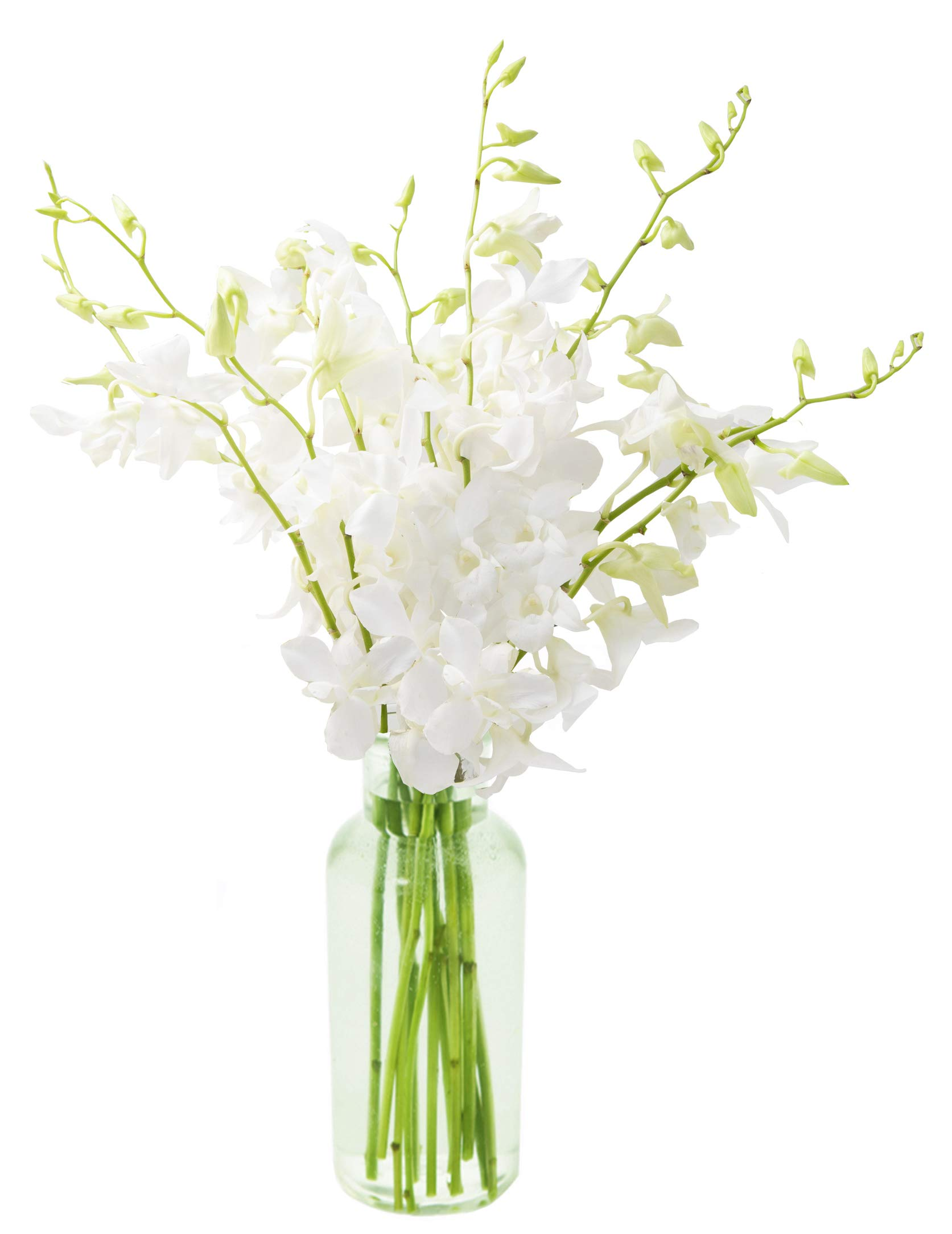 KaBloom Exotic Perla White Orchid Bouquet of White Orchids from Thailand with Vase