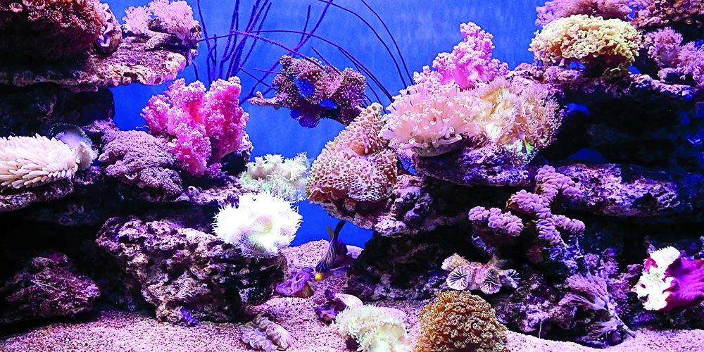VIP.LINE Coral Aquarium Background Poster PVC Fish Tank Decorations Landscape 24 48 72 (96'' x 30''/ 244 x 76cm) by VIP.LINE