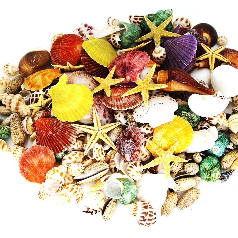 180 PCS Sea Shells Mixed Beach Seashells Starfish, Colorful Natural Seashells 1.1 Lb Perfect Accent for Candle Making, Home Decoration, Beach Theme Party Wedding Décor, Fish Tank and Vase Filler by Miraclekoo