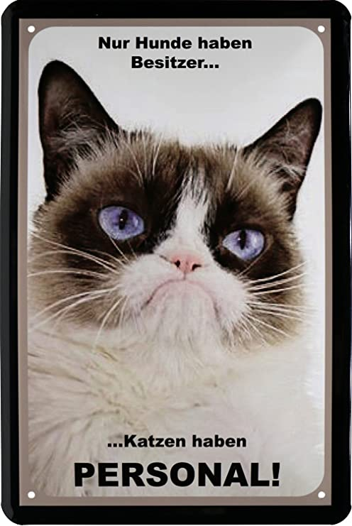 Hunde haben Besitzer, gatos Personal gato Cartel de chapa 20 x 30 Retro Chapa 113