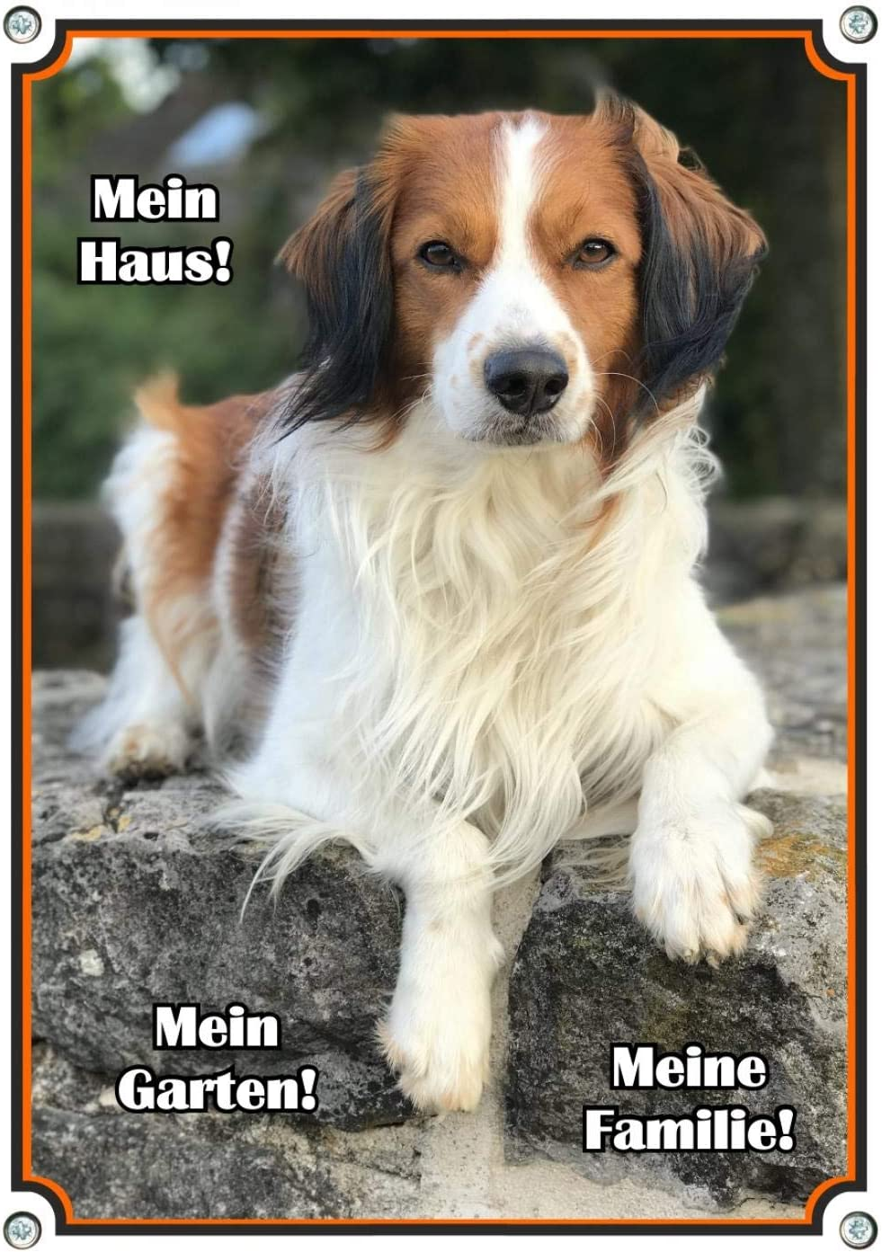 Petsigns Hundeschild Metall Kooikerhondje DIN A3 uv-best/ändig und in Fotoqualit/ät