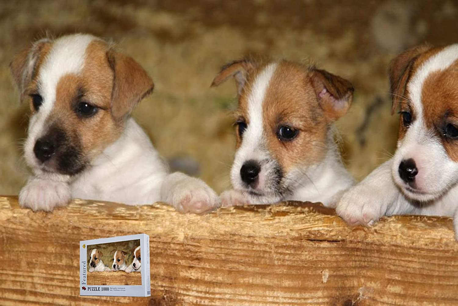 Jack Russell terrier wooden jigsaw puzzle