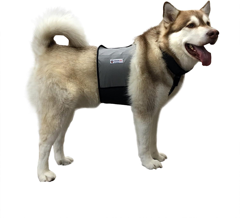 CoolerDog-Dog-Cooling-Vest-and-Cooling-Collar---Ice-Vest-for-Dogs