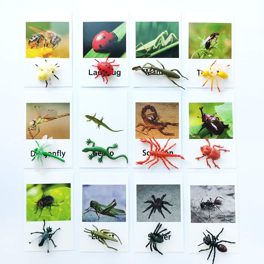 Montessori Animal Match - Insect Animal Figurines with Matching Cards Language Montessori Materials Preschool Learning Toy NEWT008