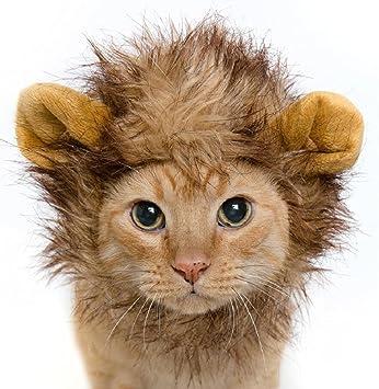 InnoWill Gatos Pequeños Perros Sombrero Halloween Mascota Cosplay Disfraz de Vestido Up Lion Peluca con orejas: Amazon.es: Productos para mascotas