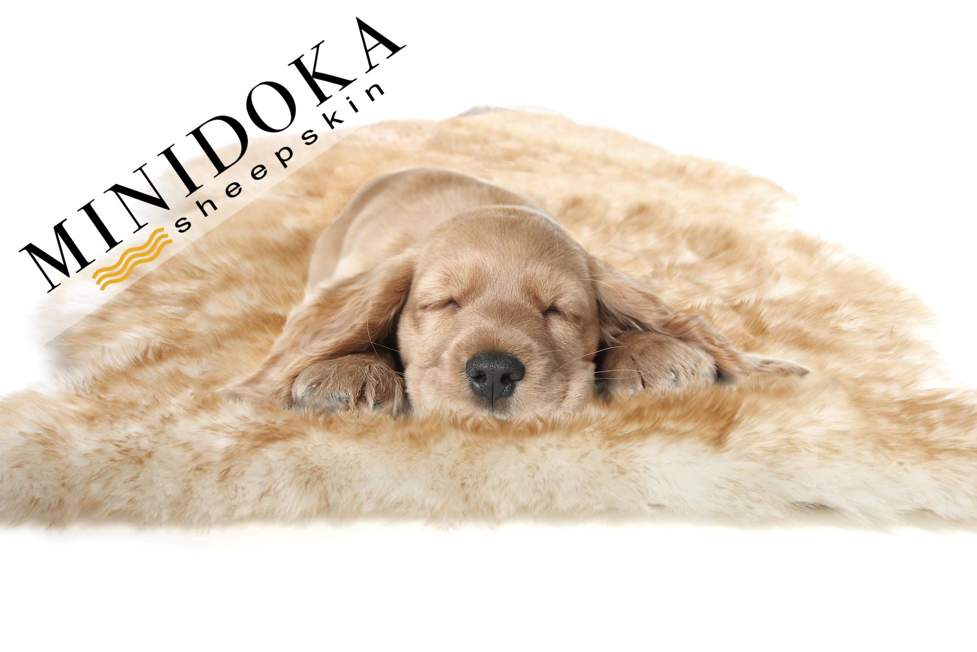 Desert Breeze Distributing Minidoka Sheepskin Pet Bed, Amber Tipped Spring Lamb Pelt, for Dog or Cat, Natural Length Silky Soft Wool