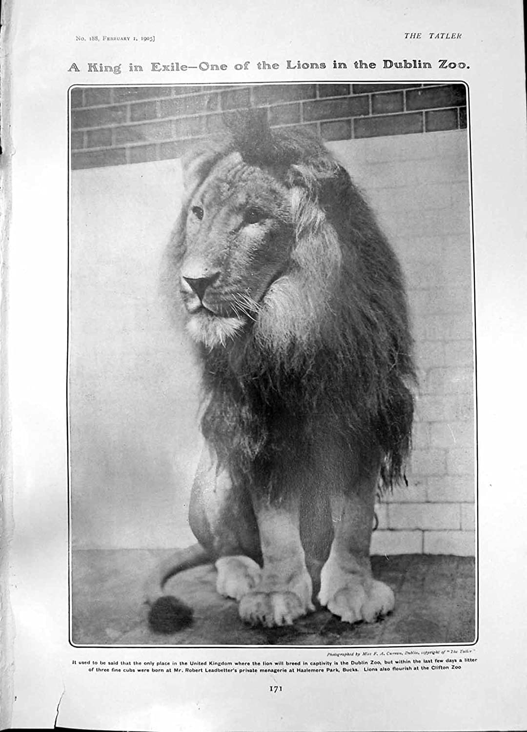 Lion Dublin Zoo New Railway Scotland Loch Earn Lays Ancient Rome1 171Q015 old-print Q0151905171