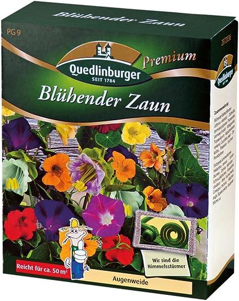 Bluhender Zaun Neu Amazon De Garten