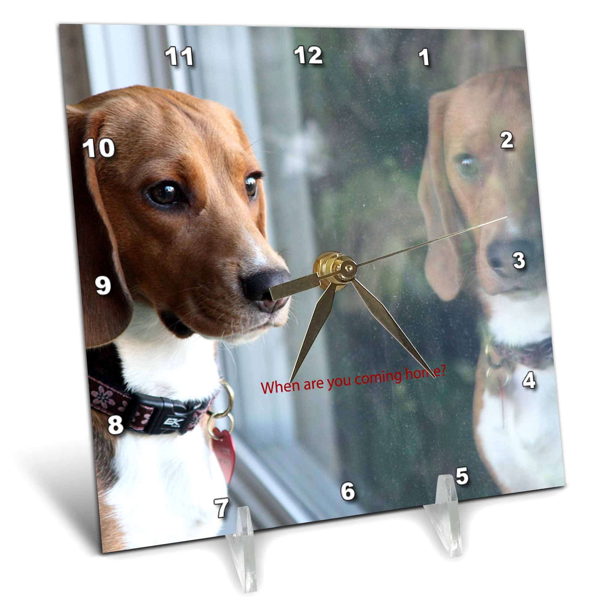 3dRose Russell Foote Photography-Dogs - Beagle looking out the window for his human - 6x6 Desk Clock (dc_281492_1)