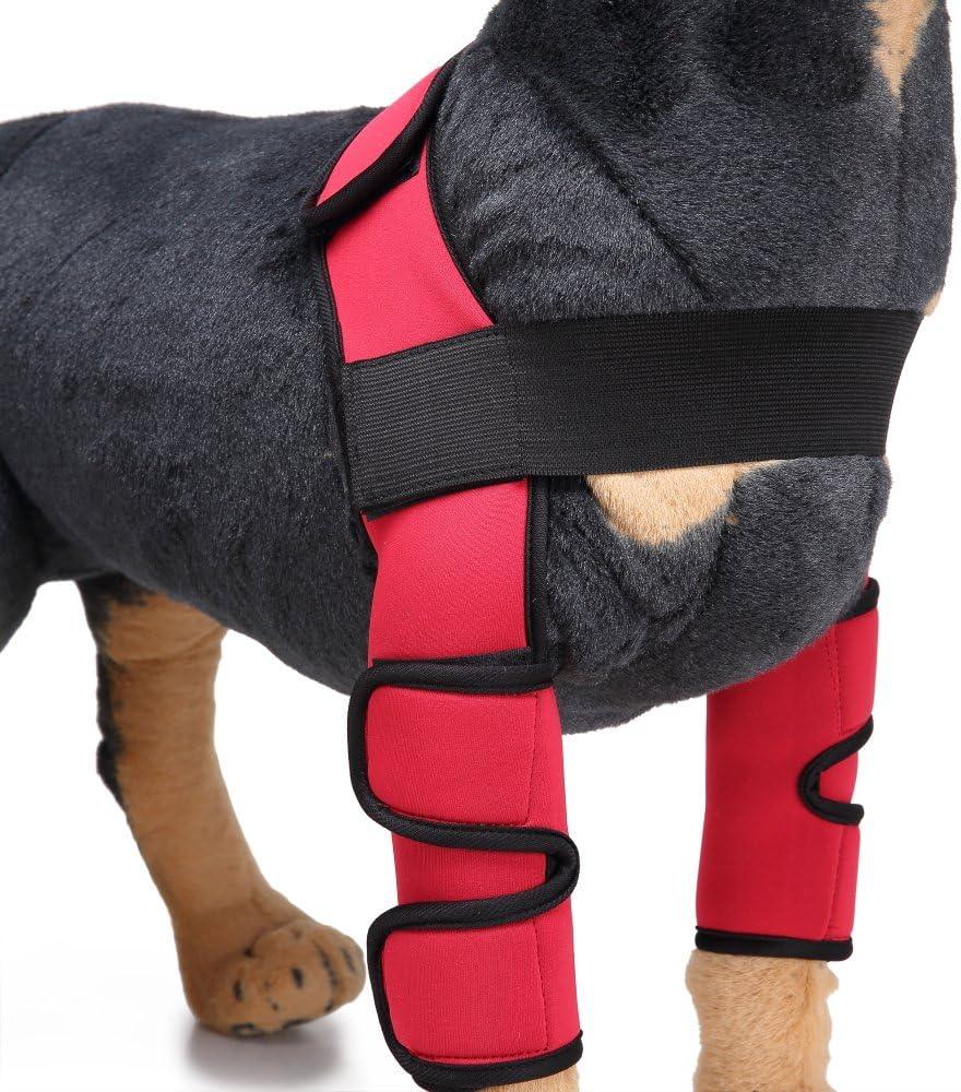Amazon.com: mdct perro protector de codo, extra de apoyo ...