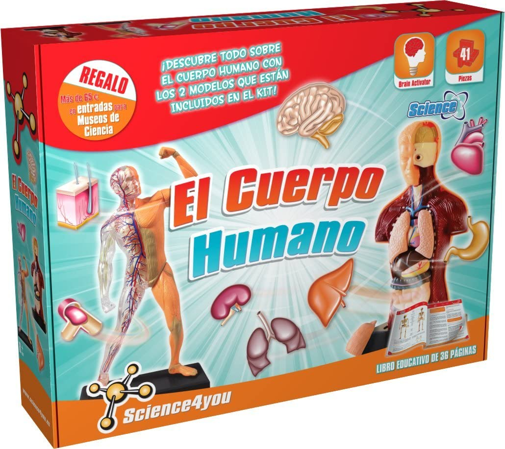 Juguete de anatomía humana