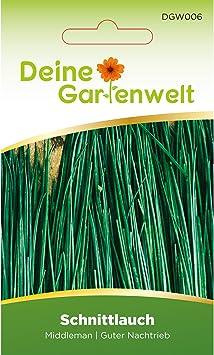 Kräuter Schnittlauch Gemüsesamen Garten