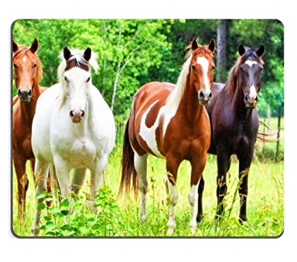 41620eac9fa73 american quarter horses Prairie animals Mouse Pads Customized Made to Order  Support Ready 9 7/8 Inch (250mm) X 7 7/8 Inch (200mm) X 1/16 Inch (2mm) ...