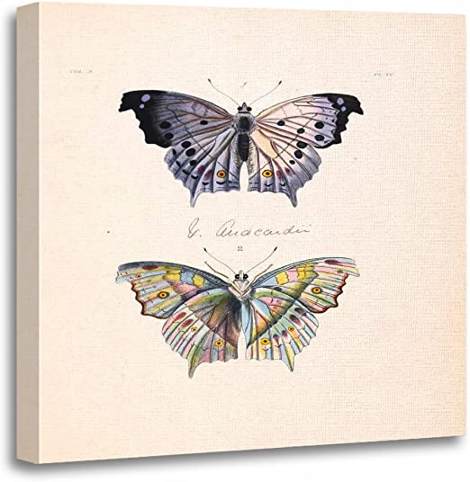 Canvas Artwork Picture Print Wall Hanging Photo Butterfly Insect Nature Animal
