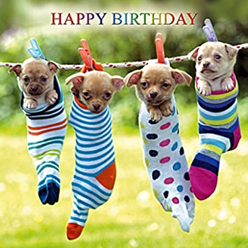 Chihuahua Dogs Birthday Card Hanging Out Together Amazon