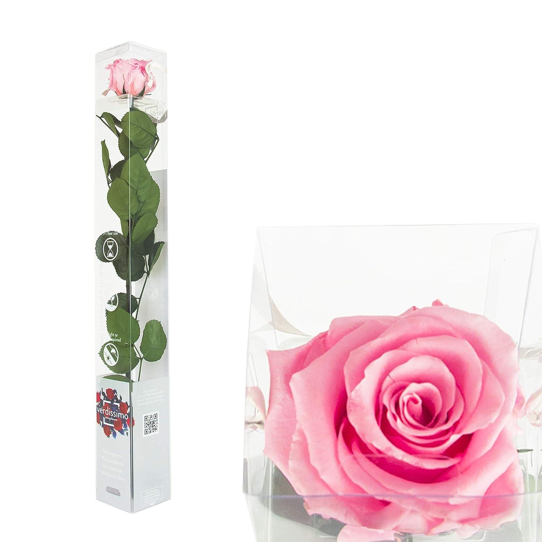 Sprecato. Colori/rose essiccate in confezione regalo – Prodotto naturale rosa verdissimo