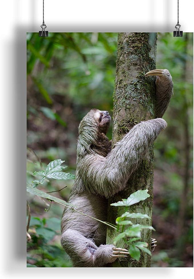 INNOGLEN Bosque de Escalada de Perezosos A0 A1 A2 A3 ...