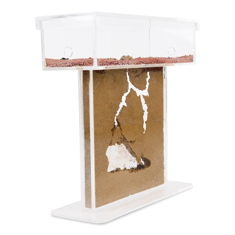 Formicarium for LIVE ants. New educational Ant farm Ameisenfarm ACFK-1