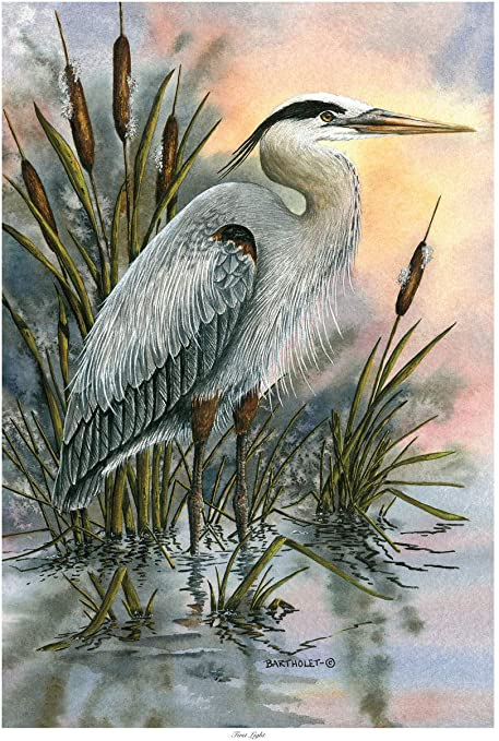 Amazon Com First Light Blue Heron Giclee Art Print Poster From Original Watercolor Painting By Artist Dave Bartholet 12 X 18 Posters Prints