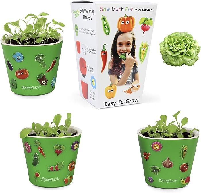 The Best Classroom Vegetable Garden