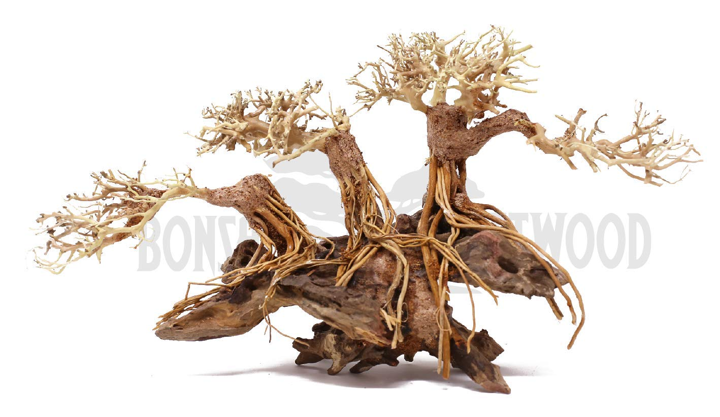 Bonsai Driftwood Aquarium Tree BSB Random Pick (12in H x 16in L) Natural, Handcrafted Fish Tank Decoration | Helps Balance Water pH Levels, Stabilizes Environments | Easy to Install by Bonsai Driftwood