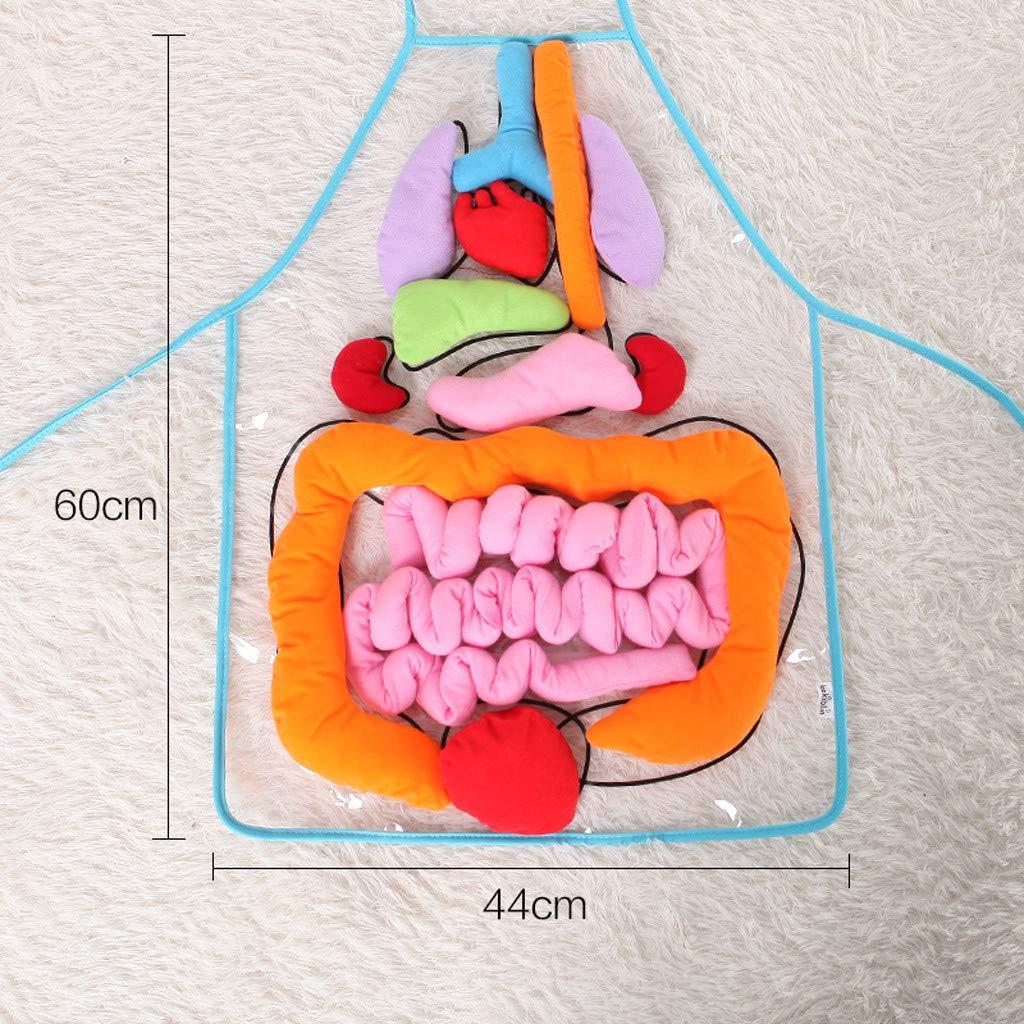 con Nombre y ubicaci/ón tama/ño e hipoalerg/énico 60 x 44 cm algod/ón poli/éster para el Cuerpo Humano anatom/ía Delantal Educativo para ni/ños ToDIDAF Lavable a m/áquina