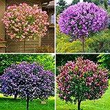 Syzygium Jambolanum Q - Mother Tincture - Promotes Normal