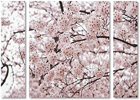 Amazon Com Trademark Fine Art Am0121 3pc Set Sm Cherry Blossoms By Ariane Moshayedi Small Posters Prints