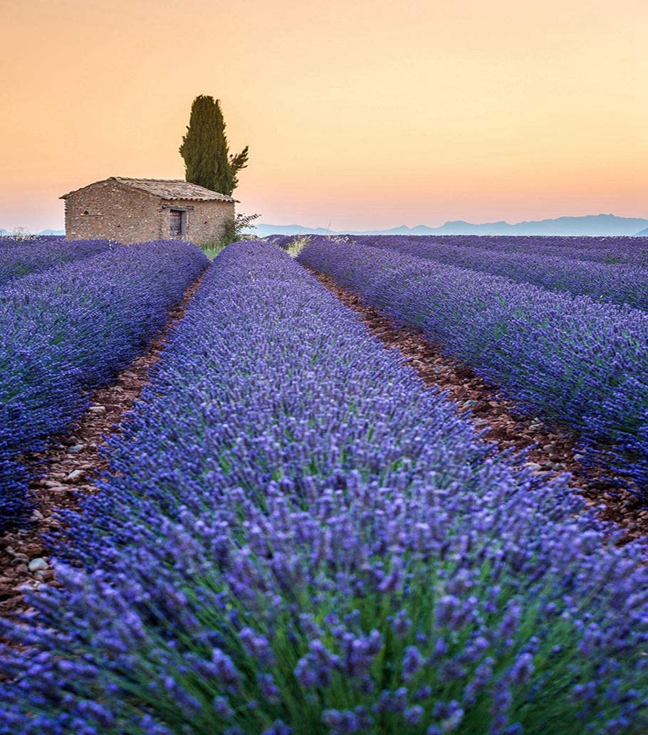"""5D DIY Diamond Painting Kits Provence Lavender Field at Sunset Valensole Plateau 20"""" X 16"""" Full Drill Painting Arts Craft Canvas for Home Wall D¨¦cor Cross Stitch Gift"""
