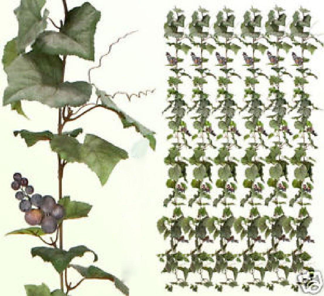 SIX 6' Artificial Grape Garland Silk Plants 632GF Ivy by Black Decor Home