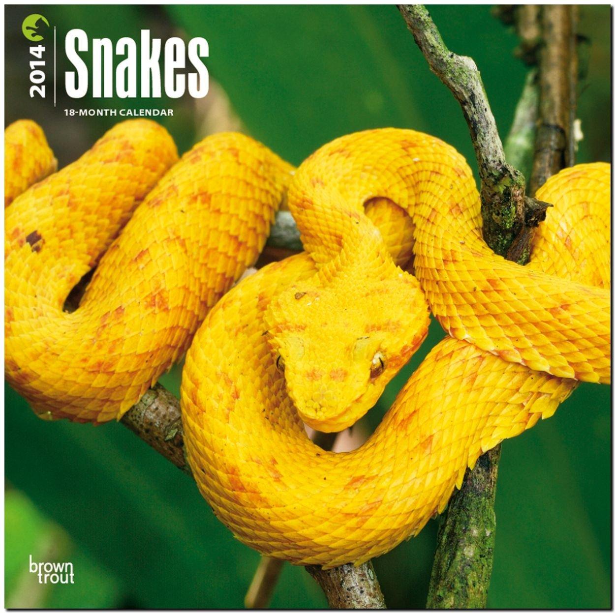 Snakes 2014 - Schlangen: Original BrownTrout-Kalender [Mehrsprachig] [Kalender]