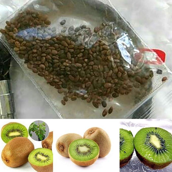 Rosepoem KIWI Semillas Semillas de Plantas Frutas Deliciosas 100 unids/bolsa Jardineras Jardineras: Amazon.es: Jardín