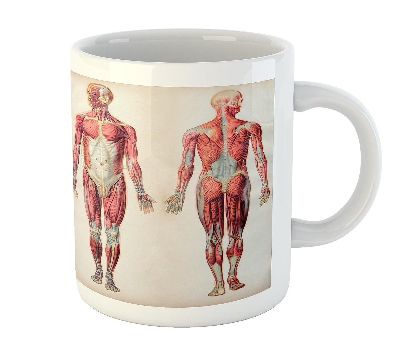Amazon Ambesonne Human Anatomy Mug Vintage Chart Of Body Front