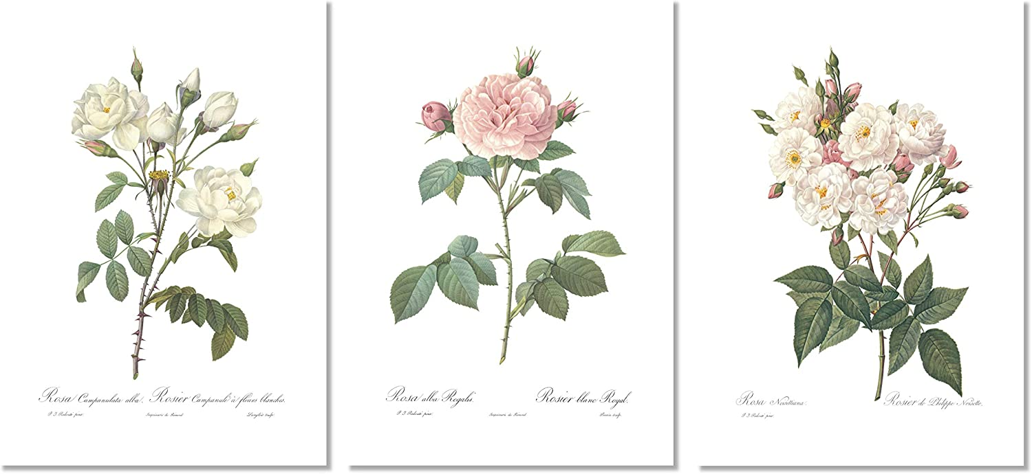 Roses Botanical Prints Wall Art, White Home Decor, Redoute, Unframed 8x10 inch